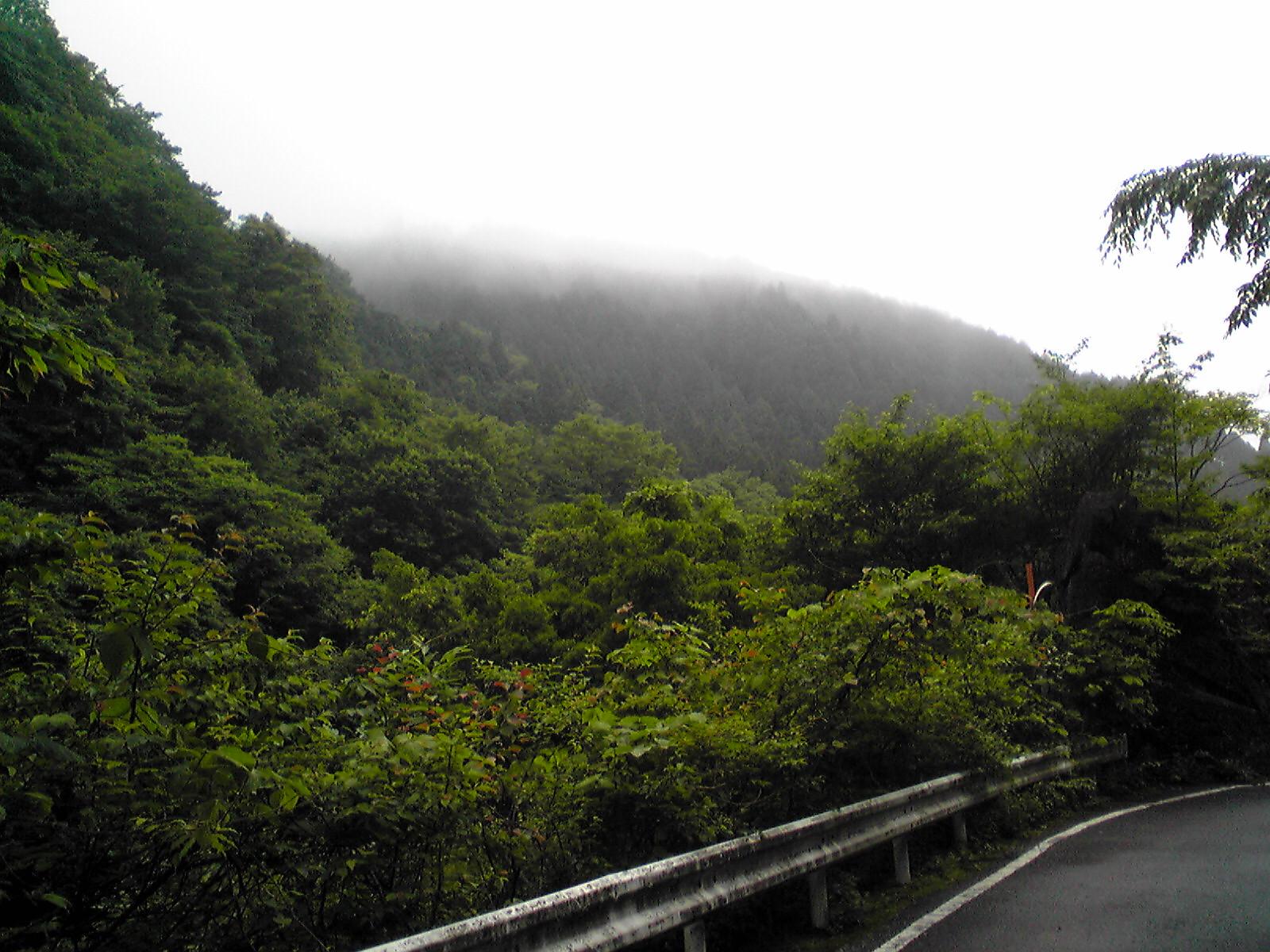 2011.06.19 早戸川林道 032.jpg