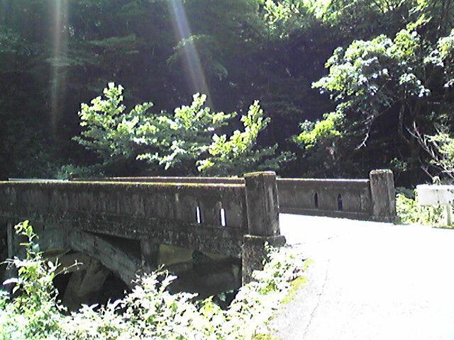 のこぎり山林道 (24).jpg
